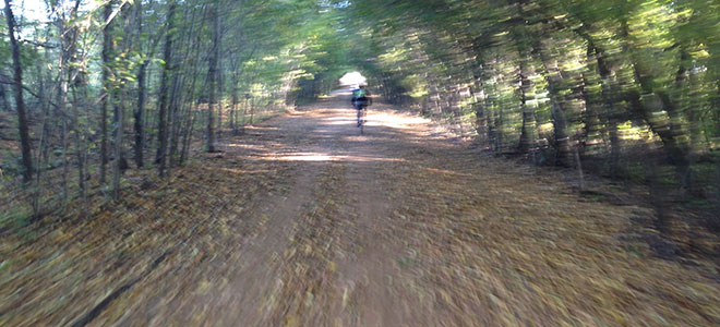 Tree-Covered-Trail-at-Ride-The-NETT-2013